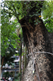 河南防雷工程 古树避雷针 特种防雷资质