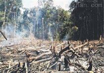 森林巡检系统