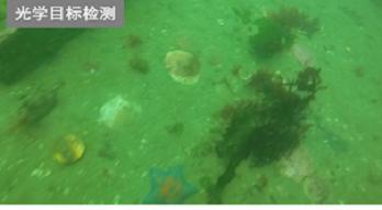 開拓水下圖像新領域 大華股份AI喜獲殊榮